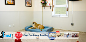 K9 Resorts Daycare & Luxury Hotels